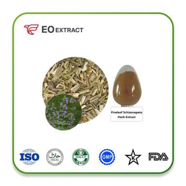 Fineleaf Schizonepeta Herb Extract