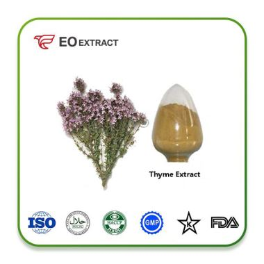 Thyme Leaf Extract